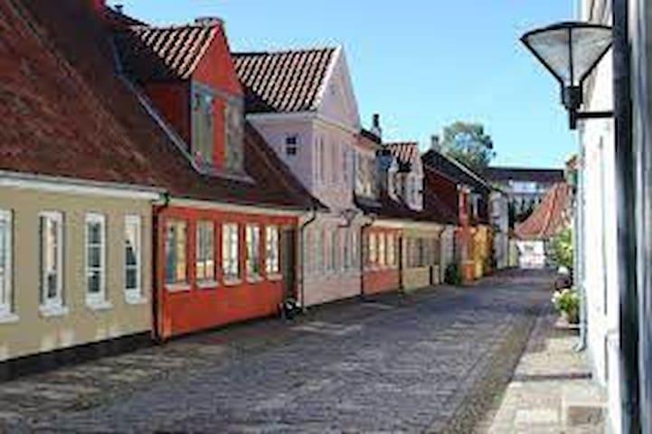 Guidebog for Odense