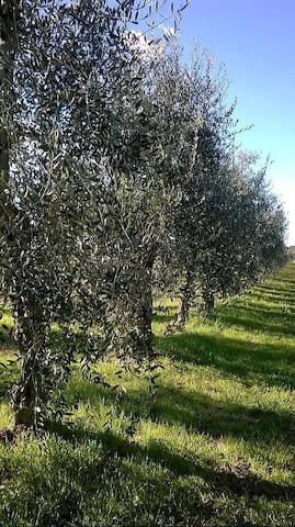 Guidebook for Chianti - Montespertoli