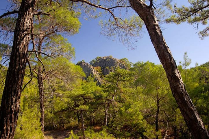 National Park of Dadia Forest