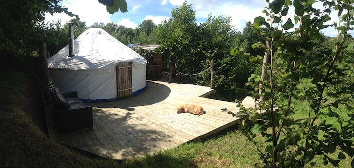 18 foot Yurt in Nut Orchard 2 miles from the sea