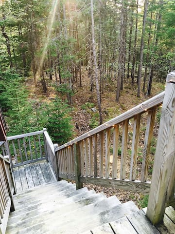 Your view of the woods from the deck