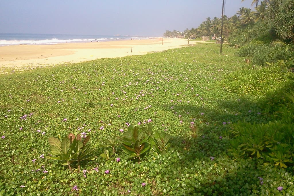 Wide beach, blue sky, white waves and green grass....