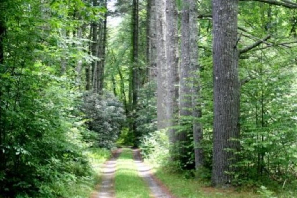 Approach to cabin tucked far from convenient thruway near major mountain attractions.