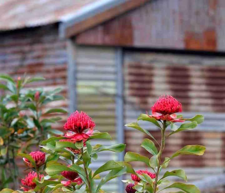 Magnolia House - Waratah