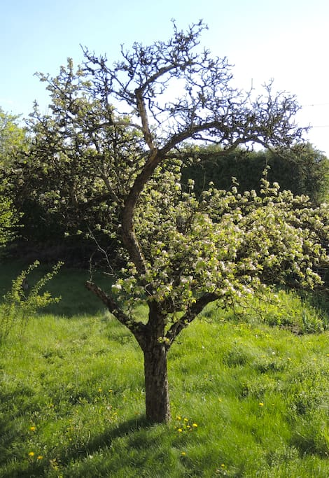...mit Obstbäumen - zum relaxen