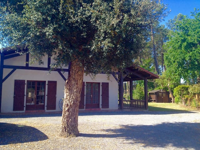 Landes style house in pine forest,