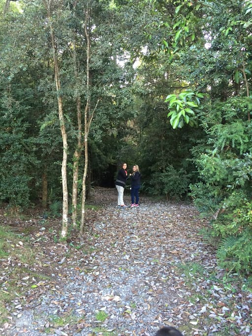 Bosque alerces milenarios el cual está a 3 minutos caminando de la casa es totalmente parte de nuestro entorno.