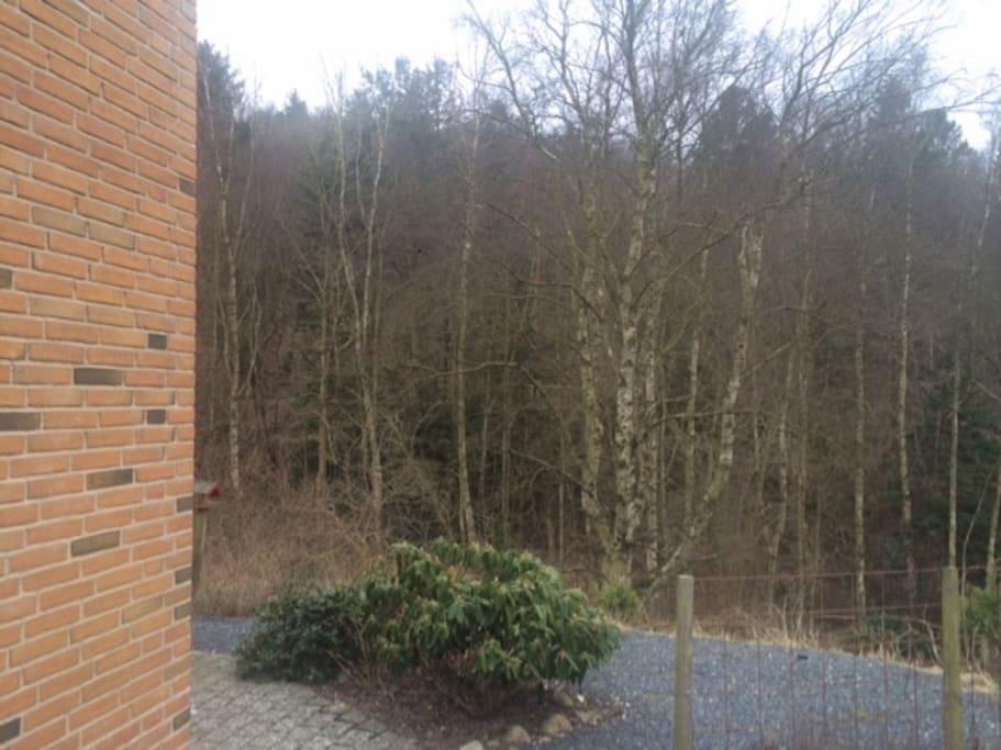 Huset ligger direkte op til skov - midt i Silkeborg