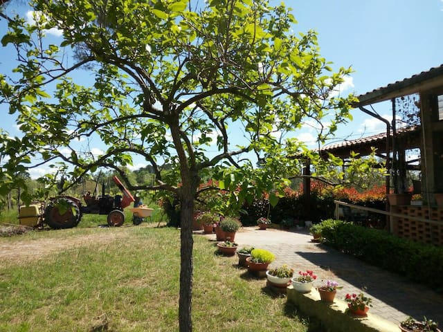 Green Tuscany near Pisa with swimming pool - Fauglia - House