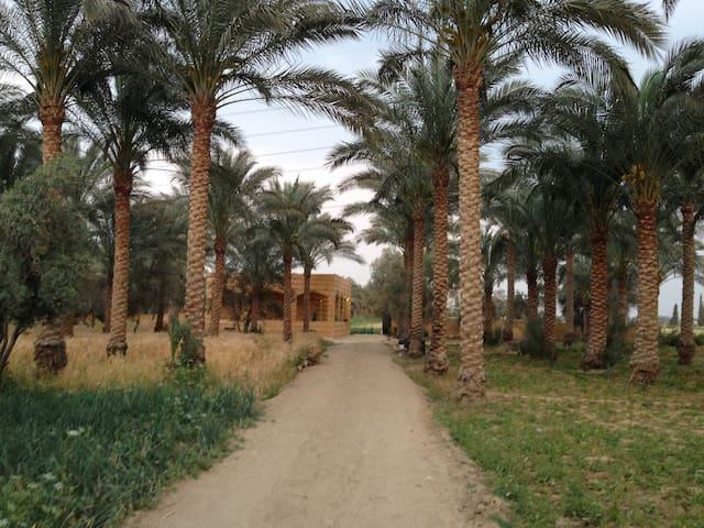 Dar Sakr