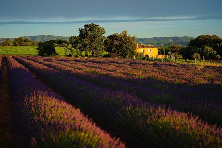 Guide de bienvenue Aix-en-Provence