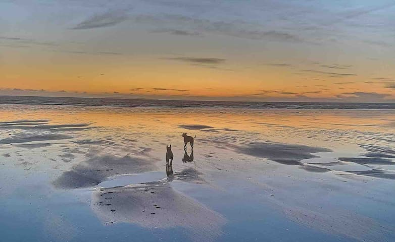 Westward Ho! Beach in April with our dogs ... perfect for an evening walk and at this time of year often deserted ... a beautiful way to wind down