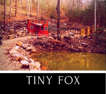 Tiny Fox - Newport