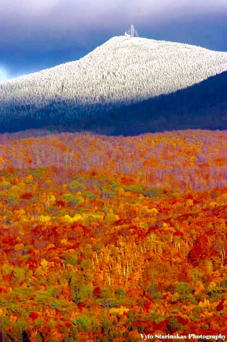Fall colors in the white mountains