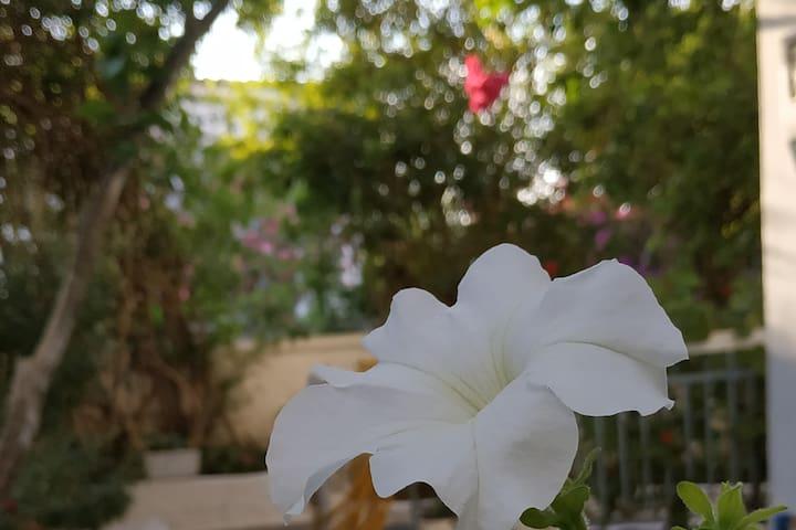 Porfiras