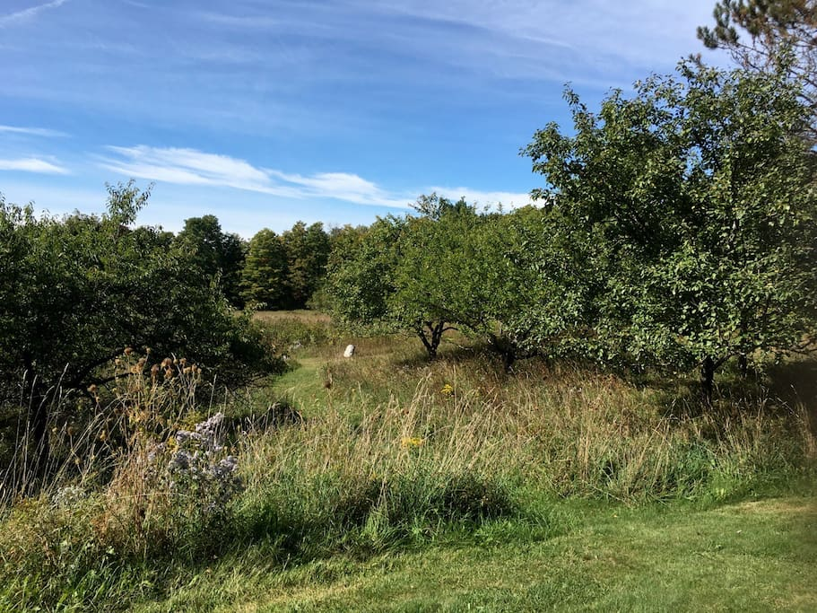 We have 14 acres of field, forest and a few old apple trees.