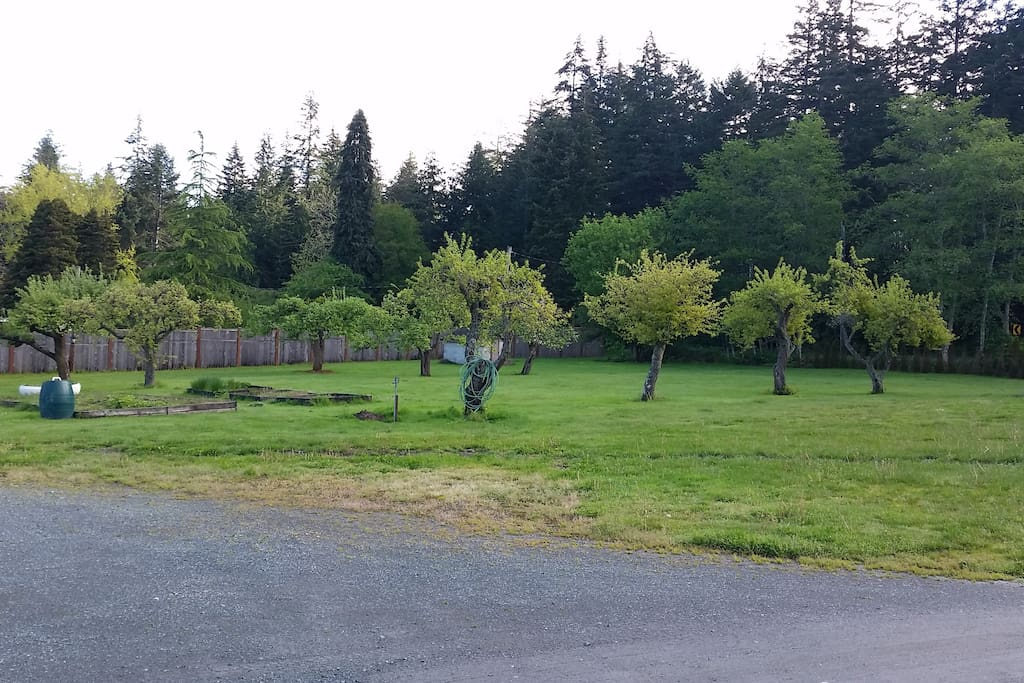 Fruit orchard and large yard