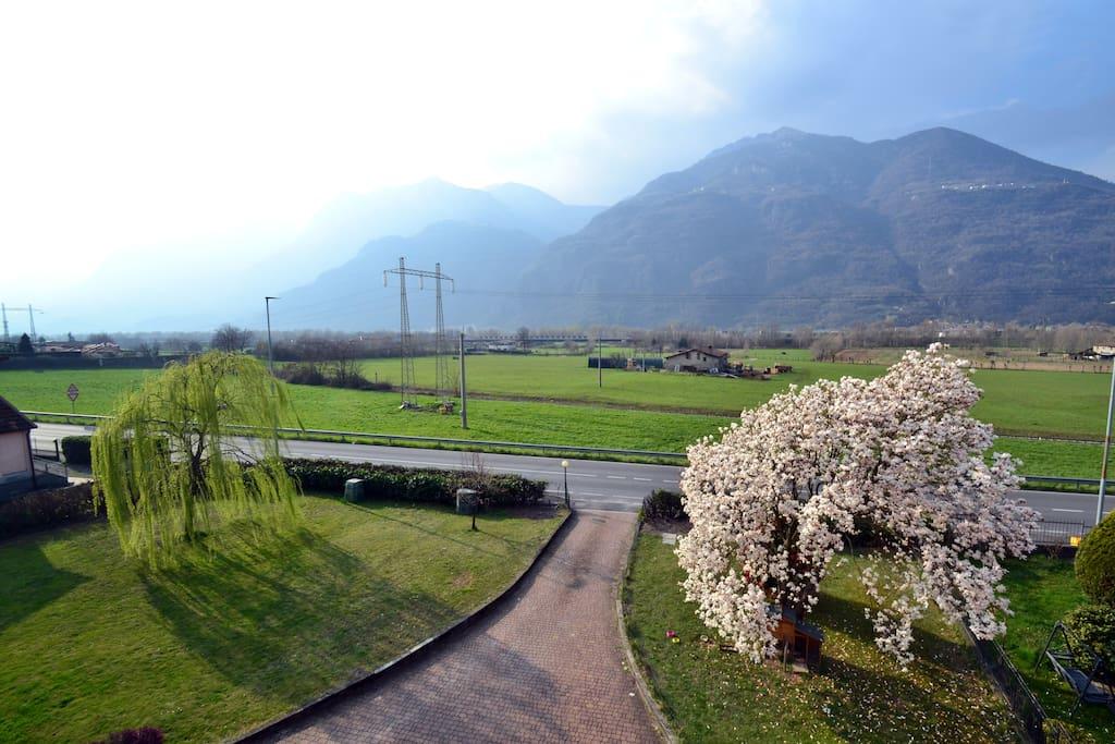 Salice e magnolia, le nostre colonne d'Ercole