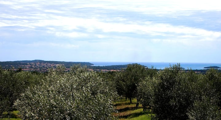 view of the sea from our olive grove