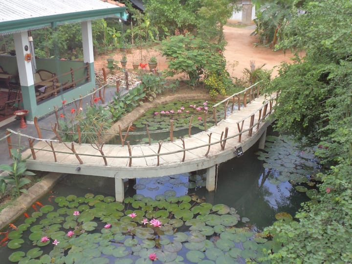 Hungry Lion Resort Jungle View