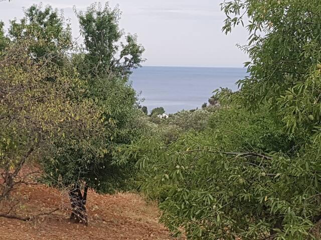 Ballıbaba Bahçe taş ev, köy evi, ilaçsız bahçe