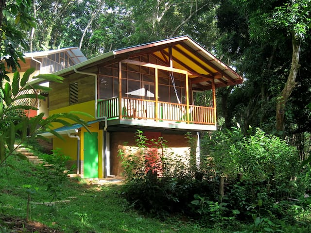 Rainforest hideaway cabin amid wildlife paradise