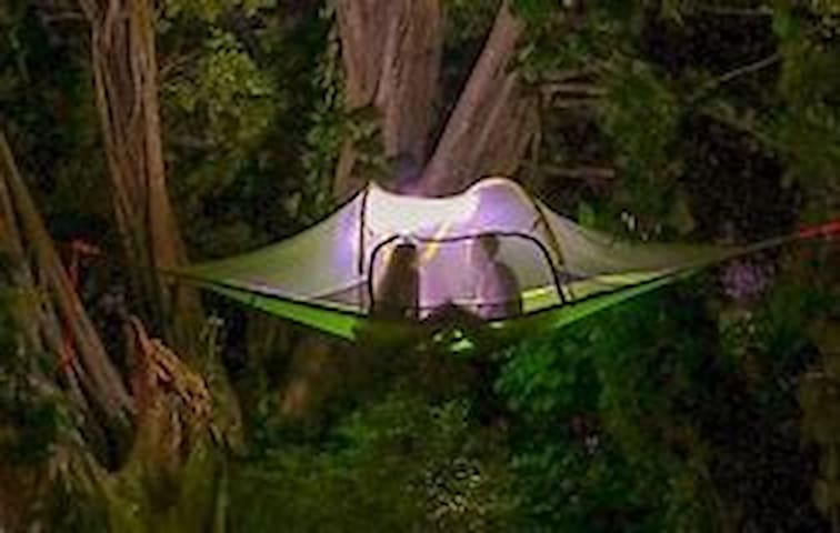 Tree Tent Camping in Forest Campsite