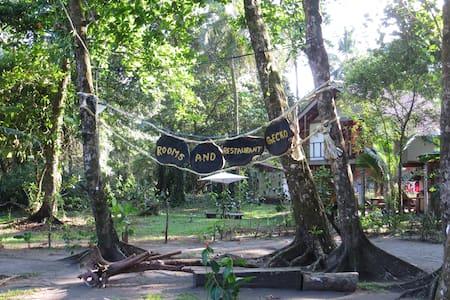 Gecko de Tortuguero - Tortuguero - Hostel