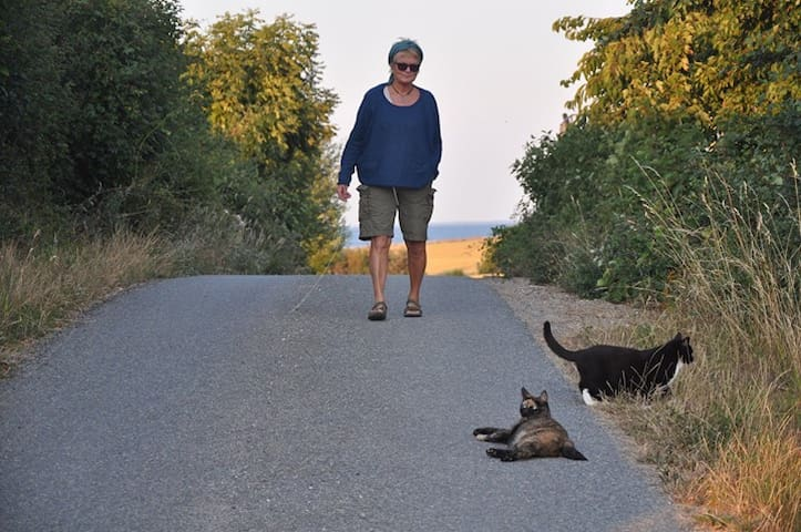 Up the road with the cats at sundown. Notice the sea in the horizon.