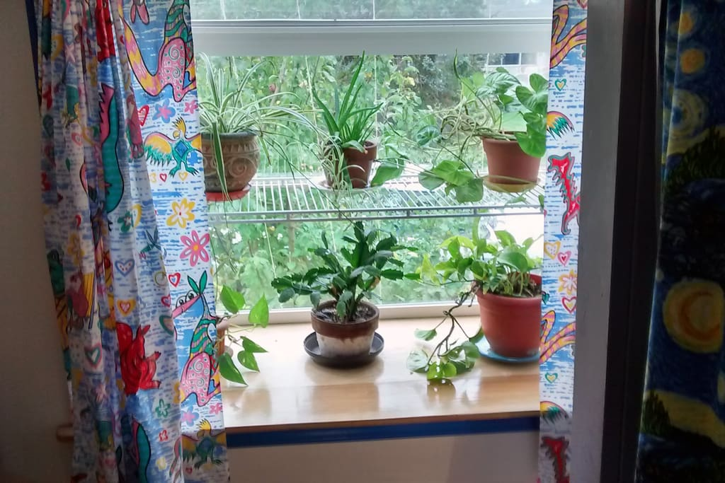 Your room has lots of plants