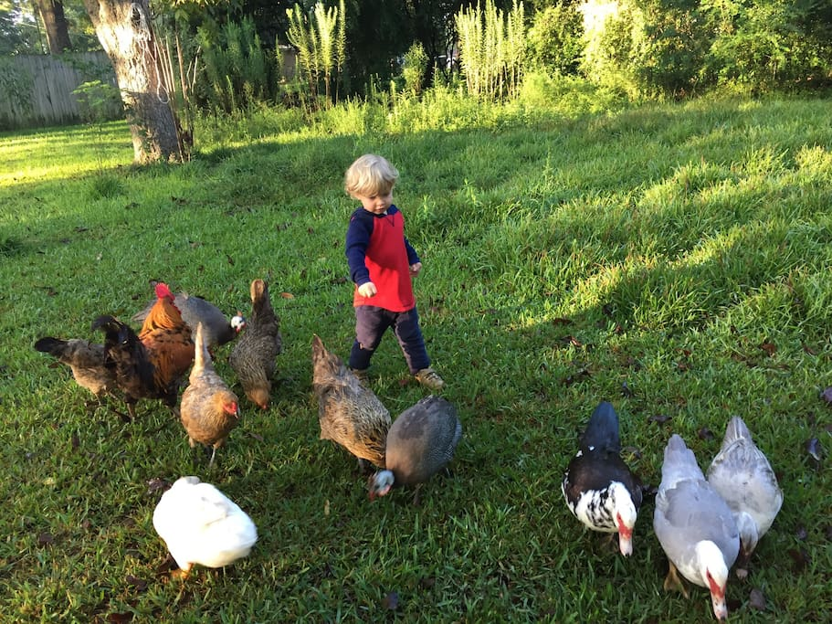 Chickens and ducks and a goose! Oh my... You might get fresh eggs when you stay here.