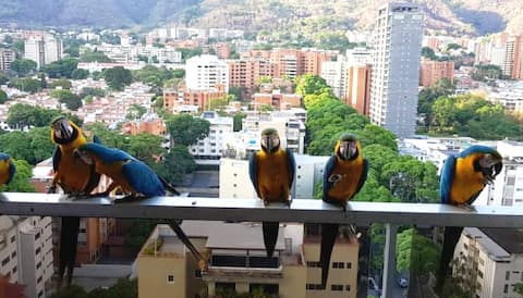 *SEBUCAN Pent House in East Side Caracas View.