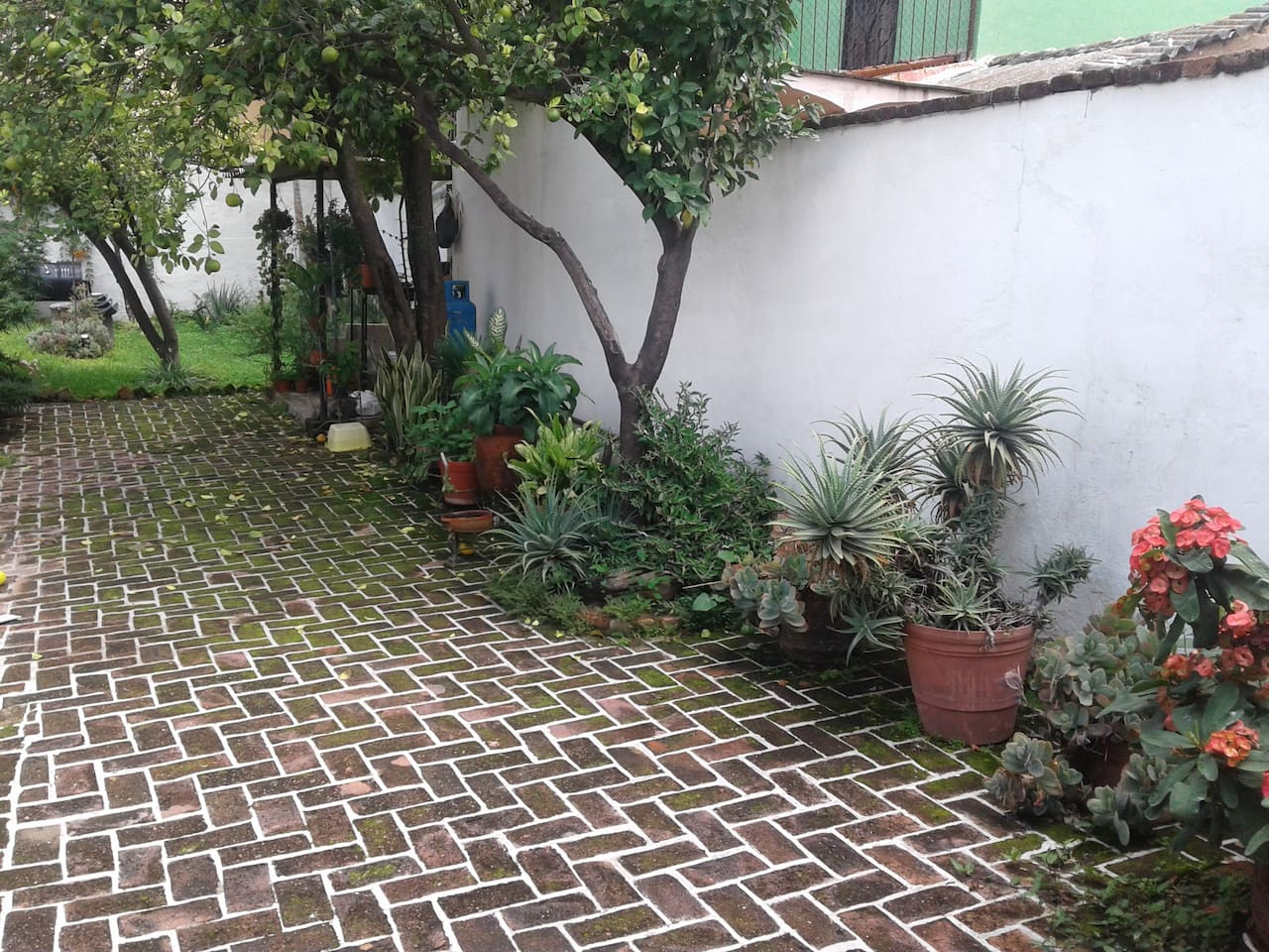 Big Patio with lots of fresh herbs.