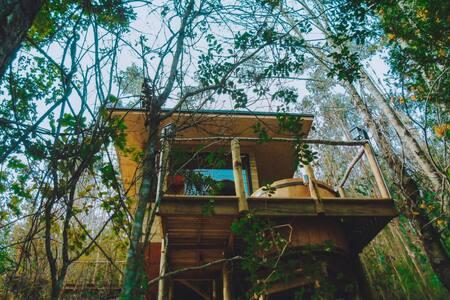 Cabaña con tinaja, inmersa en bosque nativo