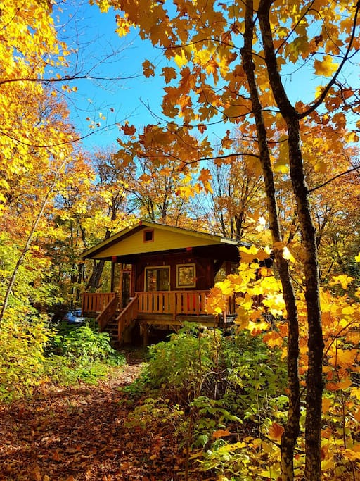 Incredible fall colors in the maple forest