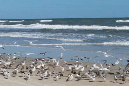 Steps to the Beach, River&Daytona - Ormond Beach - Apartamento
