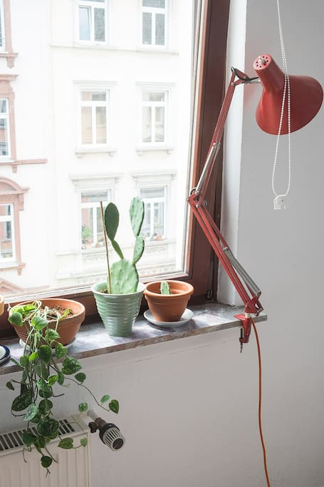 Roller blinds, plants, lamp