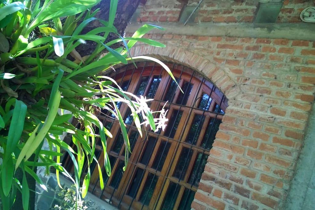 Orquideas nativas y pajaros