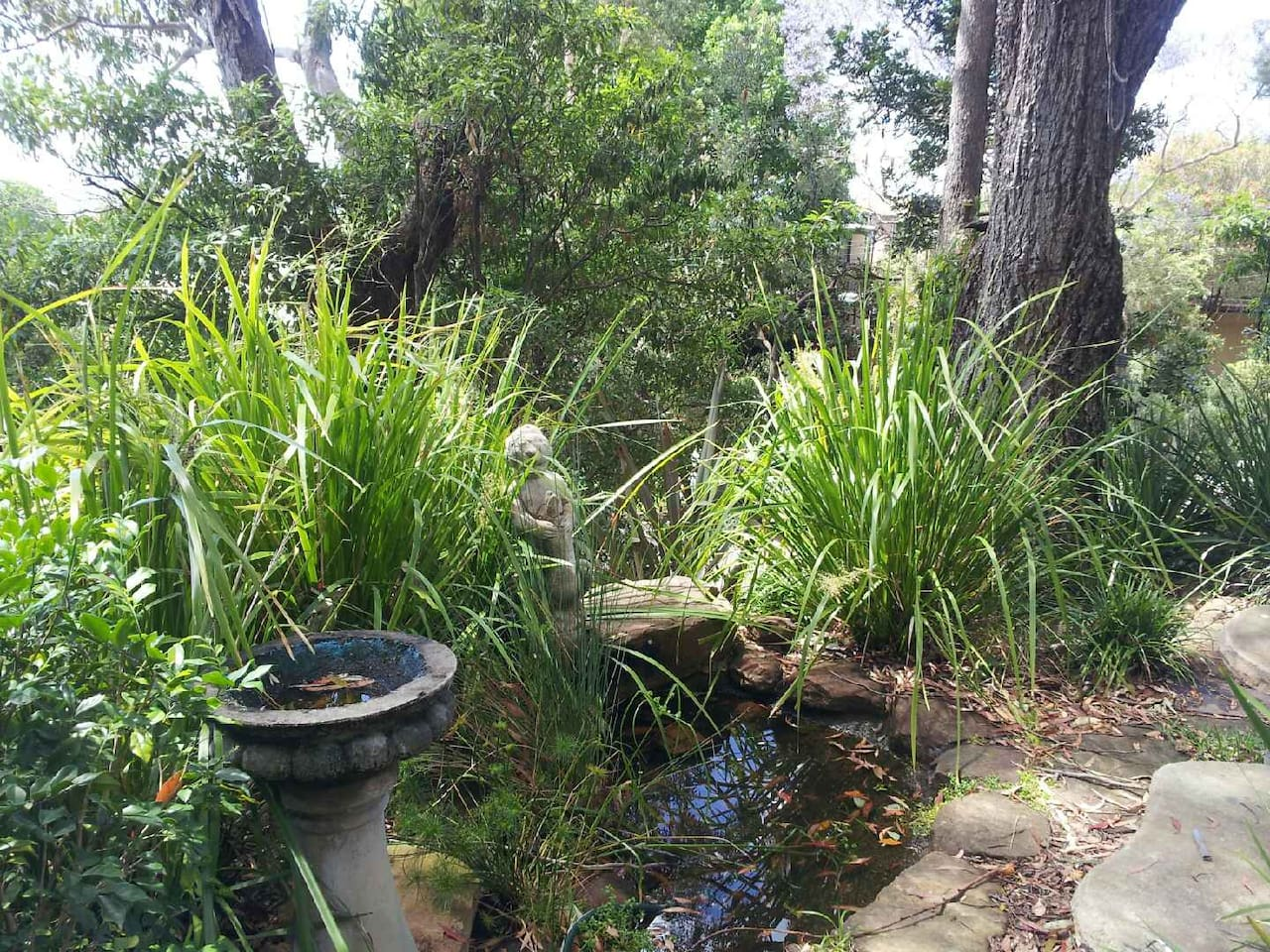 Front garden pond - leafy, green and peaceful