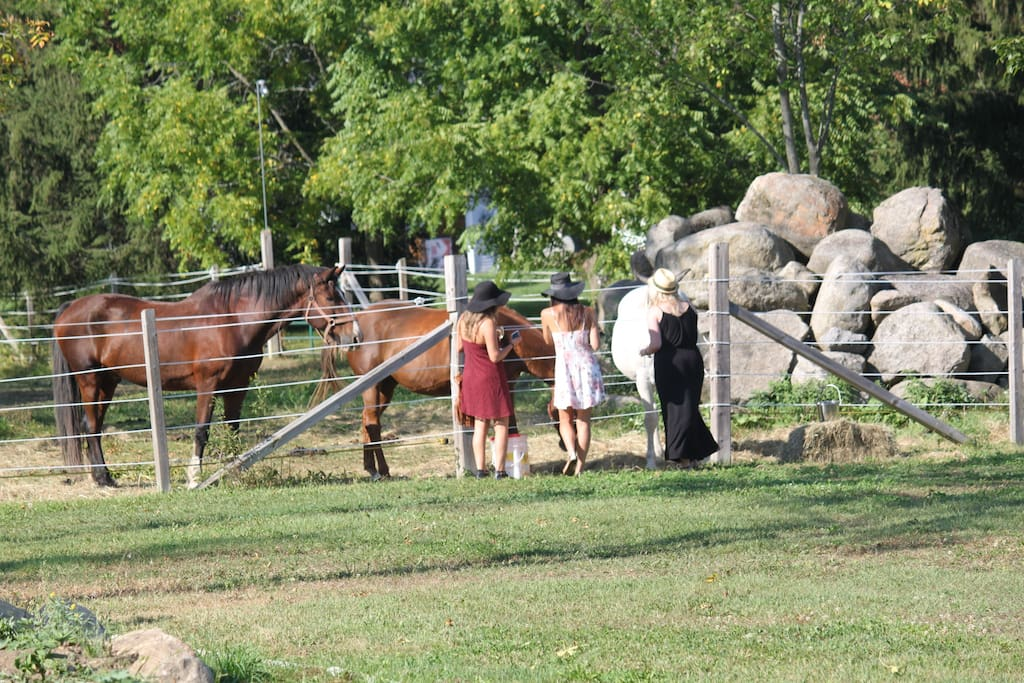 three friendly horses live onsite
