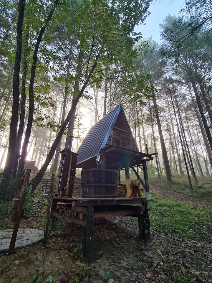 Cabane en forêt à salies de bearn