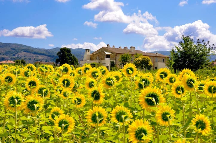 PODERE GALILEA:  Calendula  your room in Tuscany