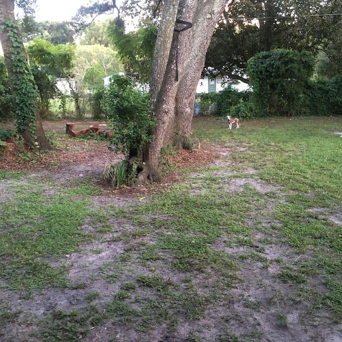 backyard....