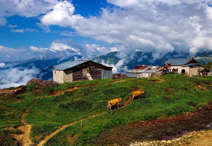 Omcore Köy Evi - Çamlıhemşin - Casa