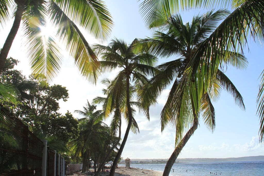 Sous les cocotiers de la plage.