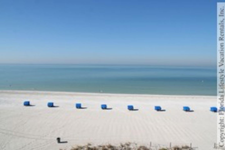 Beach Palms 504