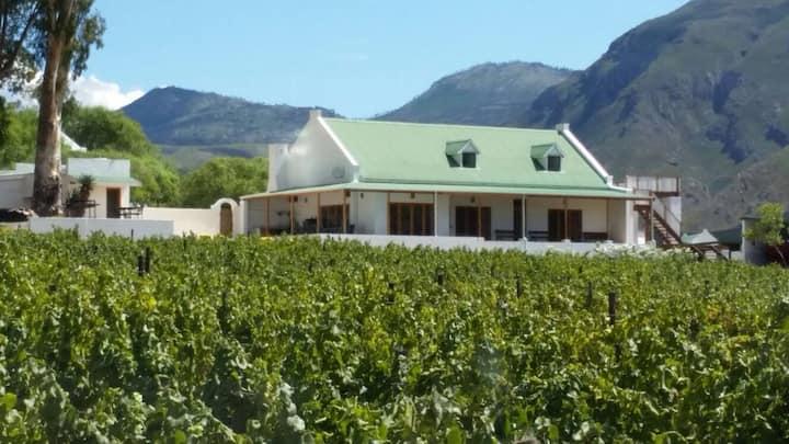 Mountainview Vineyards