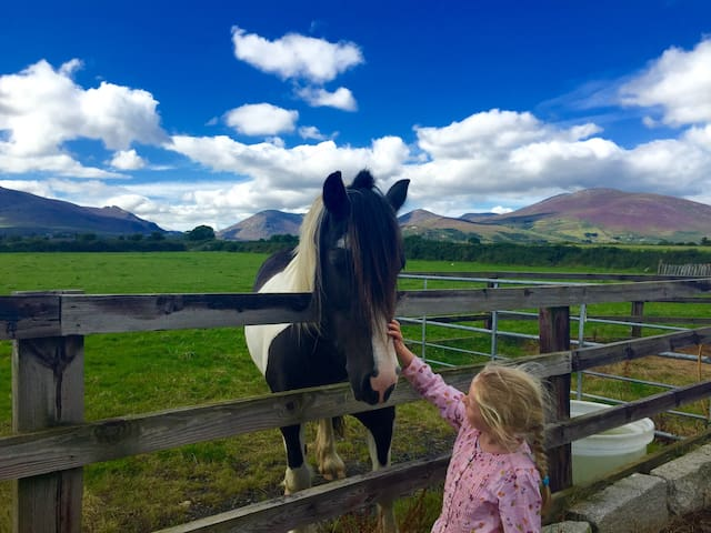 Country Cottage retreat you & your horse Mournes