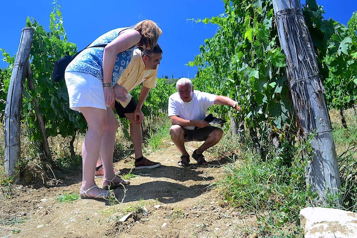The owner will be explaining vineyards