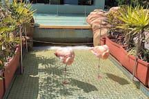 鮮やかピンクのフラミンゴも!/  You can also see pink flamingos!